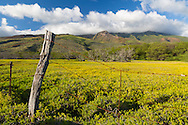A late afternoon view of the mountains on the east side of the island of Molokai, Hawaii, USA