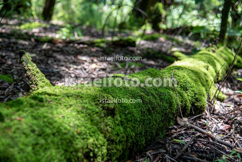 El bosque del Desierto de los Leones es un parque nacional de 1,059 hectáreas y es un Área Natural Protegida. /  The forest Desierto de los Leones is a national park with 1,059 hectares and is a protected natural area also.