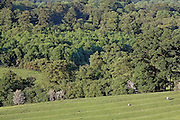 A field of pronounced Ridge and furrow pattern contrasts with a wood, Lower Coscombe Wood Stanway, Gloucestershire, England