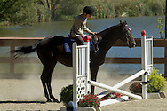 Middletown, New York - A horse decides not to jump a barrier during the 70th annual Middletown Rotary Horse Show held in the Rotary Ring at Fancher-Davidge Park on Sept. 8, 2013.