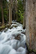 Running Creek Glacier National Park.
