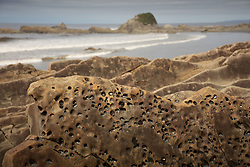 Piddock Clam Pocked Sandstone Cliffs at Kalaloch Beach 4, Olympic National Park, Washington, US
