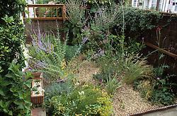 The small, gravelled front garden with Perovskia atriplicifolia, Verbena bonariensis, Stipa tenuissima and Passiflora caerulea (Passion flower)