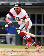 CHICAGO - APRIL 25:  Adam Eaton #12 of the Chicago White Sox bunts against the Texas Rangers on April 25, 2021 at Guaranteed Rate Field in Chicago, Illinois.  (Photo by Ron Vesely) Subject:  Adam Eaton