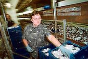 Duitsland, Laarbruch, 18-3-2002Poolse vrouw werkt in een champignon kwekerij.Voormalige opslagbunkers voor munitie van de Engelse luchtmacht bij Kevelaer worden verhuurd aan particulieren en bedrijven. Gelegen vlak over de grens bij Bergen, N- Limburg. Economie,  Ex Navo basis, koude oorlog. Europese Unie, EUFoto: Flip Franssen/Hollandse Hoogte