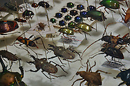 collection of insects in natural history museum in Australia
