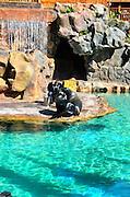Sea Lion Enclosure, Loro Parque aquarium and Theme Park, Costa Adeje, Tenerife, Canary Islands, Spain
