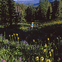 Gallatin National Forest, near Big Sky, Montana. A woman in a field of flowers.