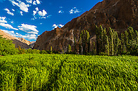 """Dahanu Valley. The valley is known as the """"Land of the Aryans"""" as the people there are considered the purest descendants of the ancient Indo-Europeans; Ladakh; Jammu and Kashmir State; India."""