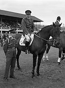 "0808/08/1987<br /> 08/08/1987<br /> 08 August 1987<br /> RDS Horse Show, Ballsbridge, Dublin. Comandant gerry Mullins on ""Limerick"" with groom."