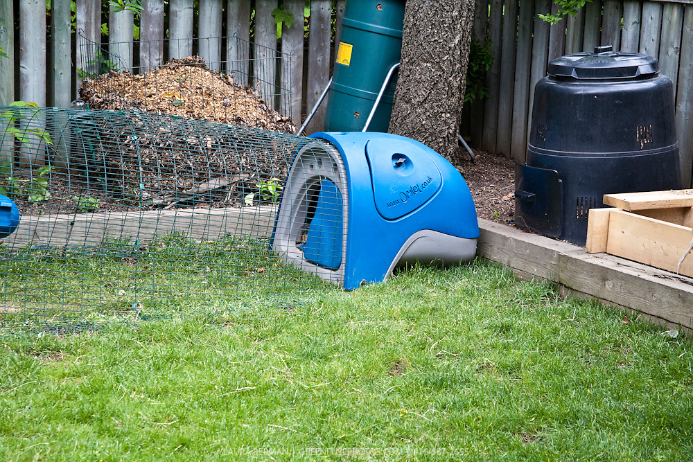 A blue Eglu, an innovative chicken coop, suitable for raising chickens in urban backyards. Keeping backyard chickens has become a very popular, if clandestine, way of getting fresh eggs for many city dwellers.