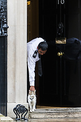 Downing Street, London, August 2nd 2016. Tensions appear to be ongoing in Downing Street as Larry the cat from No. 10 and Palmerston, newly resident at the Foreign Office continue their territorial feud. PICTURED: A custodian at No 10 pets Larry as he spots Palmerston across the street.
