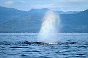 USA, Alaska, Frederick Sound, Humpback whale (Megaptera novaeangliae) blow
