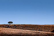A tree stands alone in the high desert of Eastern Oregon, near French Glen