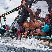 Fisherman off North Sulawesi, Indonesia work to bring in their catch of skipjack tuna.