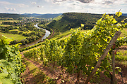 Steep slopes with vineyards and village in background, Wiltingen, Germany