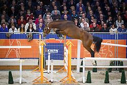 084 - Great Gonerby<br /> KWPN Stallion Selection - 's Hertogenbosch 2014<br /> © Dirk Caremans