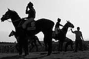 Competitors gather at the start gate at Kenilworth race course, Cape Town. Image by Greg Beadle Greg Beadle catches a fresh angle on interesting subjects. Art photography by Beadle Photo