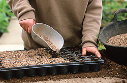 Sowing seed in modules<br /> Covering with grit