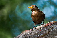 Bird in the new forrest  photo By Michael Palmer