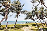Coconut palms line the coast on Green Turtle Cay, Bahamas.