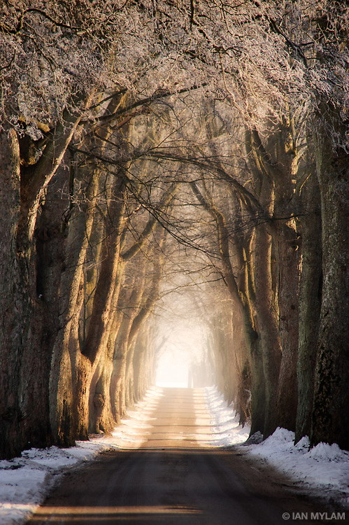 Bathed in dappled winter sunlight and under a frosted canopy of boughs, the road to Sanderumgård on the Island of Funen, Denmark, is revealed as the early morning mist rises.