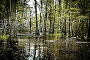 Swampland Louisiana bayou, USA