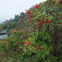 A windy, cloudy early morning on Black Balsam Knob in the Pisgah National Forest. The trail is located about a mile off of the Blue Ridge Parkway at milepost 420, about an hour's drive southwest of Asheville, North Carolina.
