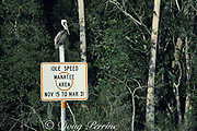 manatee zone speed limit sign, Banana Island, King's Bay, Crystal River National Wildlife Refuge, Florida