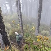 A hiker walks along the trail to the Summit of Santa María Volcano.