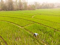 Aerial view of Luang Prabang paddy rice fields, Laos.