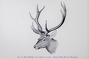 head of a Kashmir stag (Cervus hanglu hanglu), also called hangul, is a subspecies of Central Asian red deer endemic to Kashmir, India. from the book ' The deer of all lands : a history of the family Cervidae, living and extinct ' by Richard Lydekker, Published in London by Ward 1898