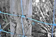 Blue Fence