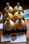 Onions vegetable show contest winner of first prize, Butley, Suffolk, England,