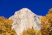 Fall color under El Capitan, Yosemite Valley, Yosemite National Park, California