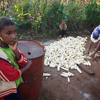 Destaw looks on as his mother Bayush dries a crop of maize outside their home. <br /> <br /> Bayush Kassan (age 37) lives in the village of Amba Sebat, 20km from the town of Assosa with her daughter Genet (age 14) and son Destaw (age 11) in a small thatched hut without running water or electricity. Bayush is part of a cooperative of 31 women who collectively own land on which they farm vegetables. She grows sesame and other oil-seeds and her village cooperative is part of the Assosa Farmers Multipurpose Cooperative Union. The Union buy's Bayush's seed for almost double the average price paid to her by private traders. <br /> <br /> Growing oil seeds presents challenges for the famers of Assosa in western Ethiopia. Many of the most vulnerable are forced to sell to when they cannot be guaranteed a good price for their product. Farms are often located in isolated areas which entails huge amounts of time and effort simply getting seeds to market. Many farmers do not have the resources to properly invest in their land and are tied into exploitative loan arrangements with brokers that deny them the chance to take proper control of their farms. And, as with other agricultural products, it is those agents that process the seeds into oil that secure the greatest profit, very little of which trickles down to benefit the farmer.<br /> <br /> In response to these pressures, twenty farming cooperatives have formed the Assosa Farmers Multipurpose Cooperative Union. By working together, individual farmers are able to pool their resources and squeeze out exploitative agents and brokers. The Union has sufficient capital that it can afford to wait for prices to reach a level at which it is profitable to sell seeds to market. The Union provides loans to constituent members together with training and advice to help farmers make better use of their land. And by collectively hiring vehicles through the Union, farmers need not spend so much time ferrying their produce to market. <br /> <br /> All these measures benefit farmers and have