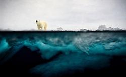 Polar bear (Ursus maritimus) in the pack ice in Svalbard, Norway