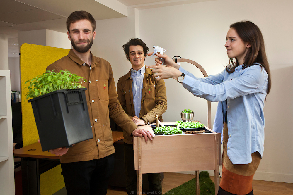 Ciel mon radis ! installe un kit potager dans les bureaux des entreprises pour fédérer les employés autour de la culture d'aromatiques originale