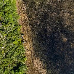 """""""Aberta de Clúsia (Paisagem) fotografado em Guarapari, município do estado do Espírito Santo -  Sudeste do Brasil. Bioma Mata Atlântica. Registro feito em 2018.<br /> ⠀<br /> ⠀<br /> <br /> <br /> <br /> ENGLISH: Open of Clusia photographed in Guarapari, in Espírito Santo - Southeast of Brazil. Atlantic Forest Biome. Picture made in 2018."""""""