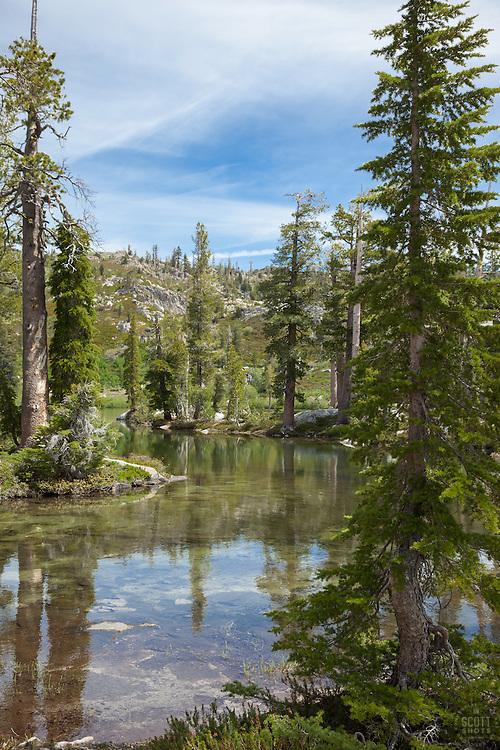 """""""Paradise Lake 2"""" - Photograph of pine trees along the shore of Paradise Lake in the Tahoe National Forest."""
