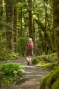 Rear view of a senior hiker in a forest near the beginning of the Routeburn Track from the Routeburn Shelter, South Island, New Zealand