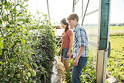 Researcher Julie Dawson and graduate student Kitt Healy inspect the tomatoes in the greenhouse at the University of Wisconsin, Madison's research farm.