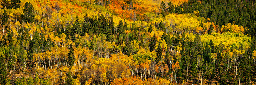 A wave of Fall colors flood the mountainside in the Wind River mountains of Northwestern Wyoming.