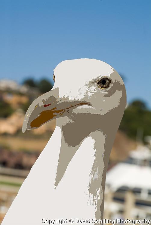 Sea gull on San Francisco Bay