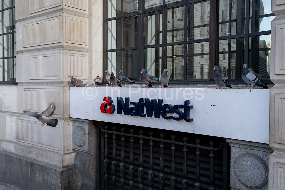 A single pigeons takes flight from a ledge outside the Bank branch of Nawest Bank PLC in the City of London, on 1st March 2021, in London, England.