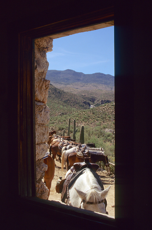 North America, United States, Arizona, Tucson, horses in corral viewed through barn window, Tanque Verde Ranch