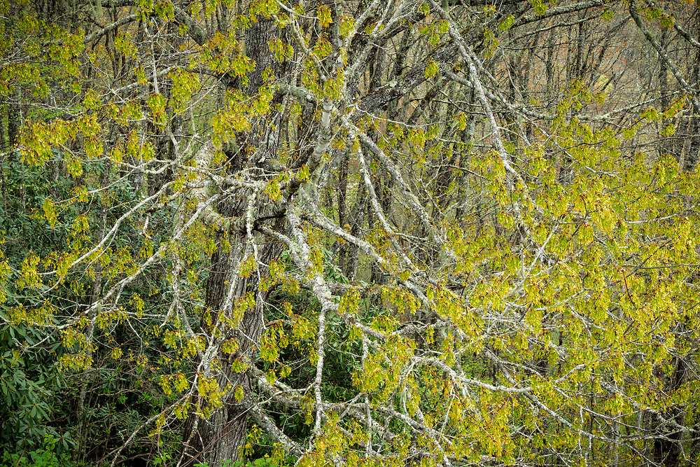 Bare trees in spring, Blue Ridge Parkway