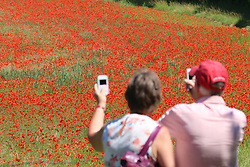 © Licensed to London News Pictures. 05/07/2017. Eynsford, UK. People have been enjoying beautiful poppies in full bloom in a village near Dartford in Kent. Photo credit : Rob Powell/LNP