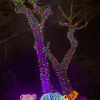 Holiday decorations adorn trees at the San Francisco Zoo, California