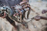 Jayapura, Papua, Indonesia - July 15, 2017: Jeklin, age 7, and Jesica, age 9, hold two freshly caught octopus at Pantai Base G, a beach on the outskirts of Jayapura The family is from Biak, visiting Jayapura for vacation.